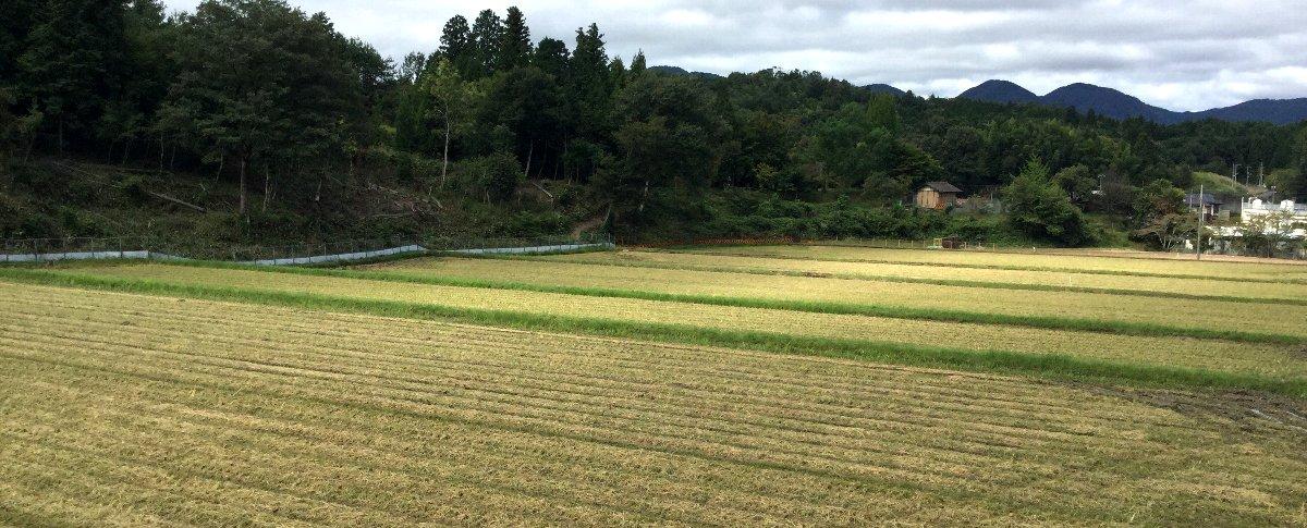 収穫の終わった田んぼの様子