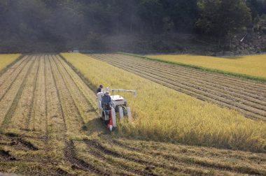 田んぼの大きさ形で刈り方を変えます