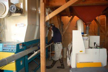 螺旋状のバネが回転するホースで籾を乾燥機へ入れる
