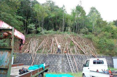 伐採した樹木はトラックで搬出
