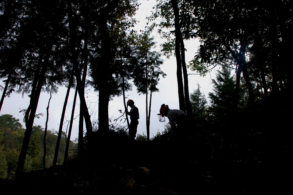 伐倒した樹の枝処理