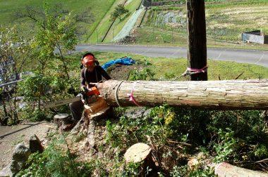 伐った反動で画面左の墓地に飛び込まない様に右の桧とロープで繋ぐ(大成功)、チェンソーは75cc