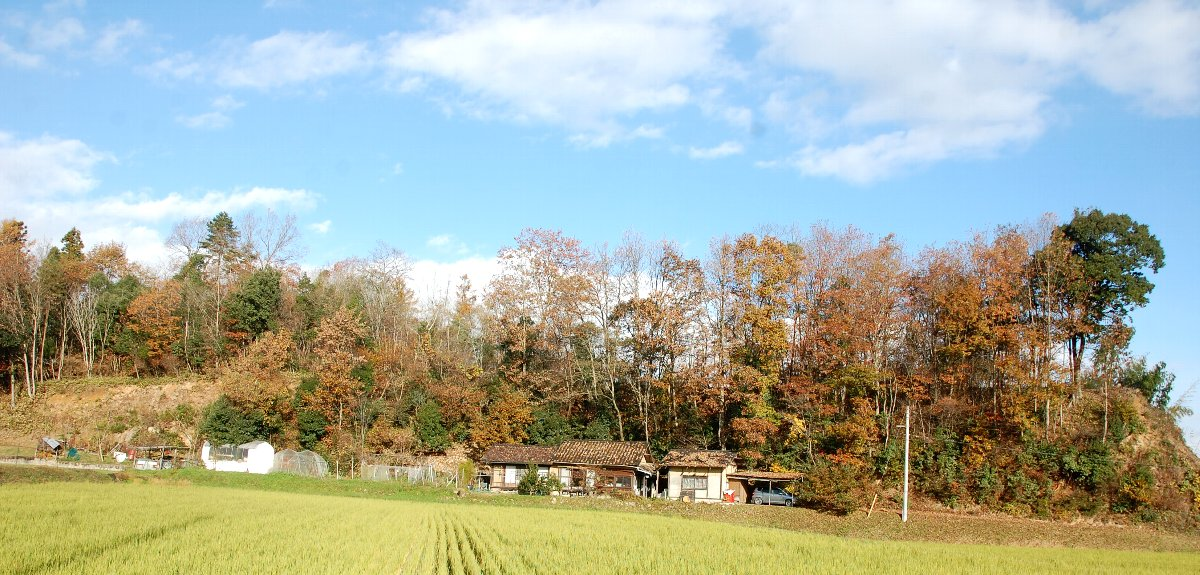 東京は雪のニュース、千代田はこんなに晴れ、初めての来訪、家の真上辺りの山で昼食