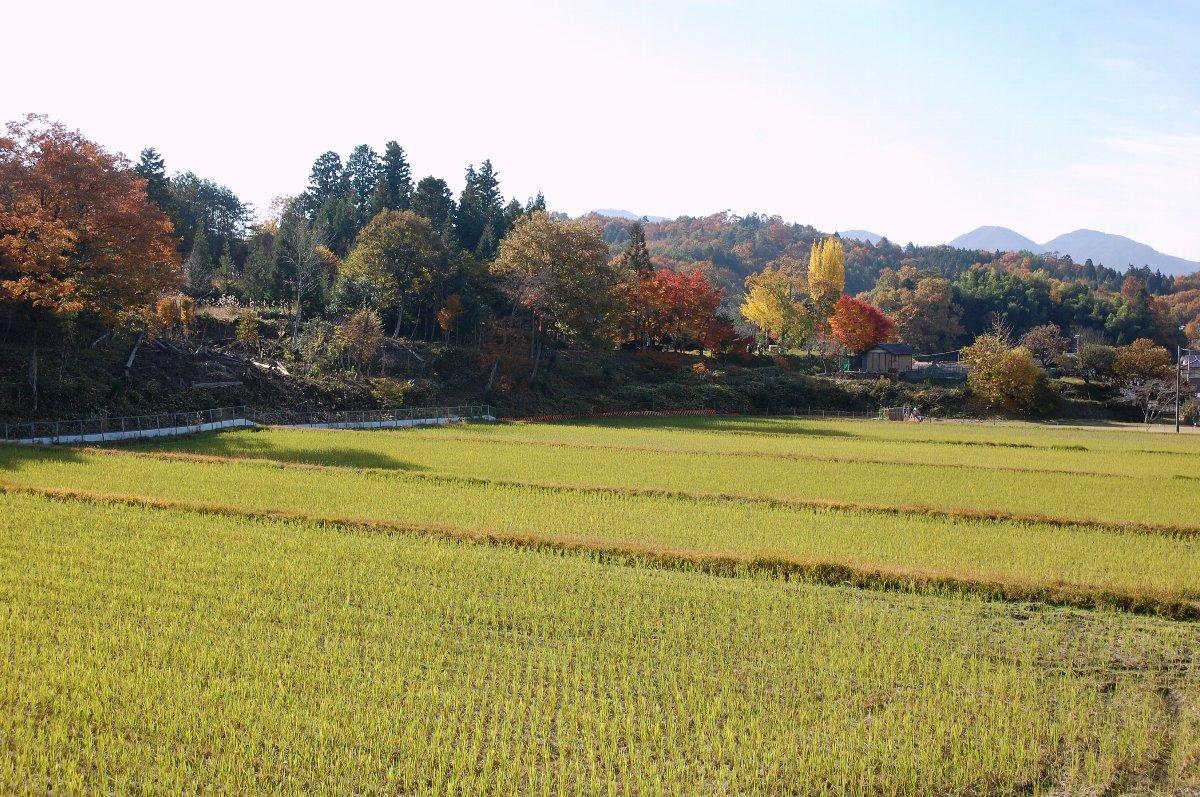 5枚の田んぼを合わせると1町2反、すべて自然農法栽培
