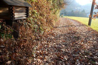 家の入口付近の落葉
