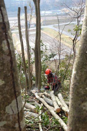 薪や椎茸の原木用となるように90㎝に玉切り