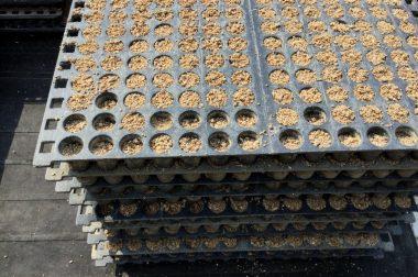 苗箱を積み重ねた時に少しでもずれているとネズミが隙間から入って種もみをほじくって食べる