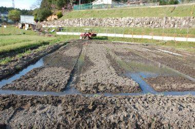 ①水面を見ながら畝の高さを均一にします