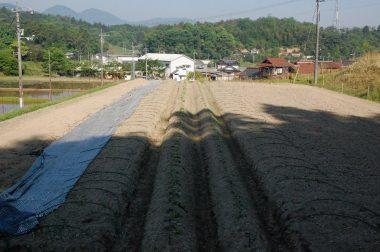 気温は30℃近い、土は乾いてパサパサ