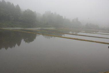 雨の翌日の朝