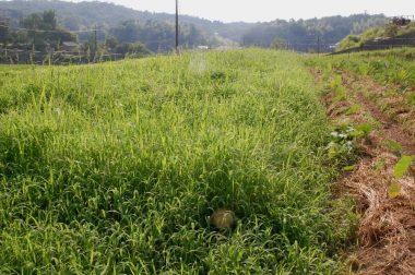 この時期は草の成長が早い