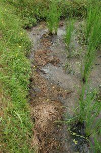 刈った草を畦際の田に入れたら、田んぼに草が生えなくなった