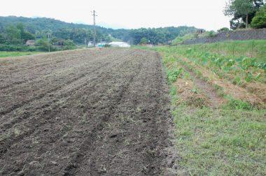 トラクターで耕起して草と土を混ぜる