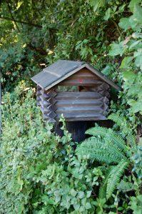校倉の郵便受けの中にアシナガ蜂が巣を作っている