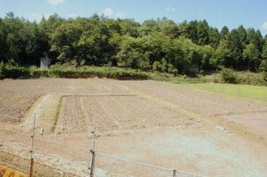 ニンニク、玉ねぎ、苗代などで利用していた3反弱の畑を耕した