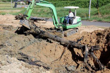根や枝が付いたままの大きな栗の樹が埋まっていた