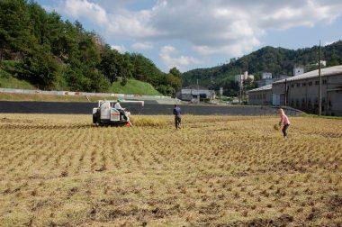 今年の稲刈ラスト3mで終わり~!