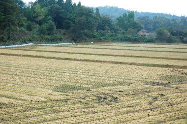 稲刈の終わった田んぼ