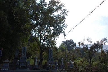 墓石の奥はクルミの樹 右は光ファイバーが通っている
