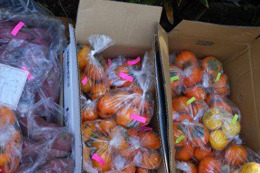柚子や柿も