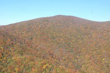 稜線付近は葉が散っていた