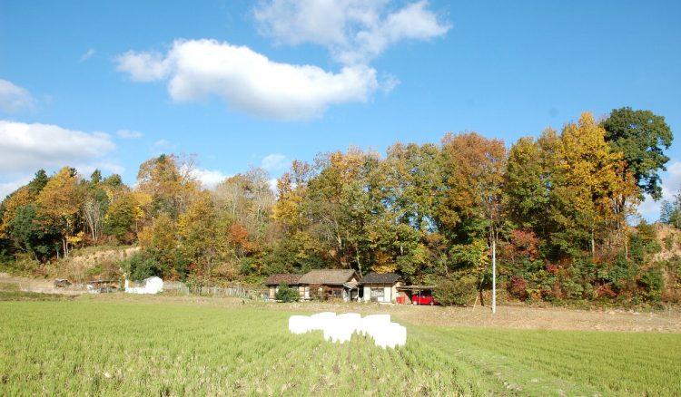 自宅と収穫祭会場になった裏山