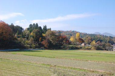 田んぼ周辺の紅葉
