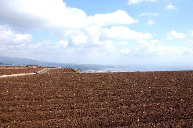 空を耕している様なジャガイモ畑