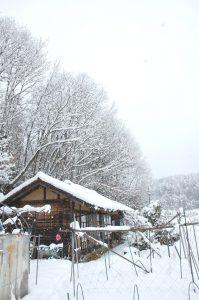 気温が低いので枝の雪が落ちない