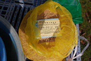 ミルキークイーンの種籾