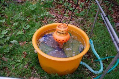 浸種でたっぷりと水を吸った種籾を32℃にして発芽を促す