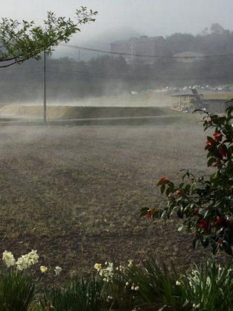 雨の翌日晴れると田んぼが煮えているみたい