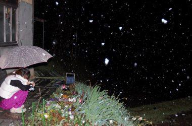 夜は雪が降りだした