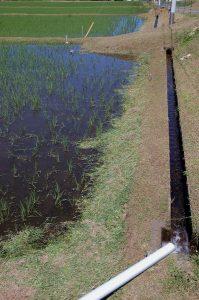 刈った草を田んぼ側に入れる