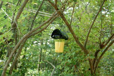 ハチの巣から4m離れた所にセットしてある