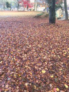 境内の落葉はすっかり枯葉色