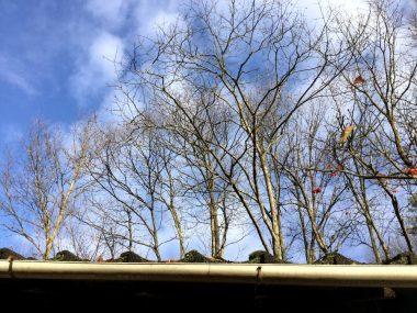 屋根越しに見た裏山のクヌギ林
