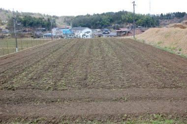 土取りばかりやっていたら腰が痛くなりそうなので畑の耕起も