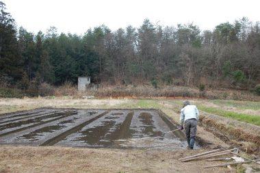 ①苗床をエブリで均平にする