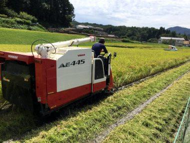 雨続きで田んぼの土が軟らかいけど天気が良いので稲刈決行!