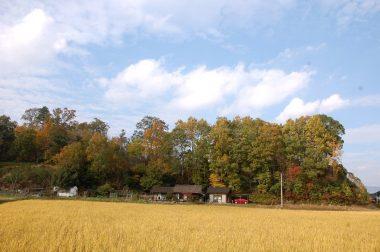 家の前の飼料稲(家畜の餌)も裏山のクヌギ林も車もすっかり色付いて