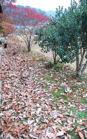 晴れた日に落ち葉を踏むとカサカサと葉の擦れ合う音を楽しみたくてついもう一歩進む