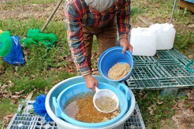 塩水の中でも沈む充実した籾を種にする