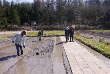 苗箱と土を圧着させたら次の畝を準備 表面をトロトロにする
