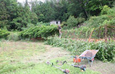キャダツ、刈払機、剪定ばさみ、チェンソーなどを使って伐る