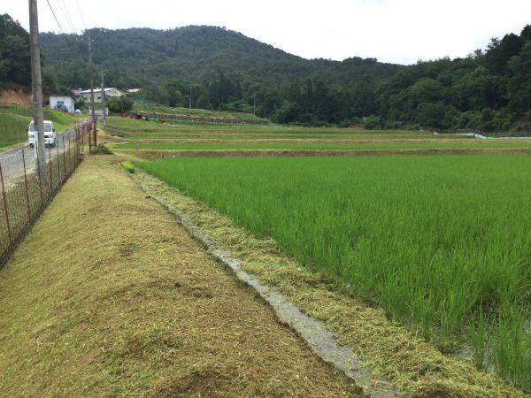 田植え後初めての草刈