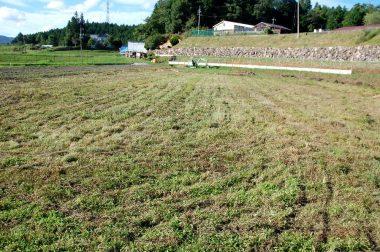 刈終ってみると意外と広い畑