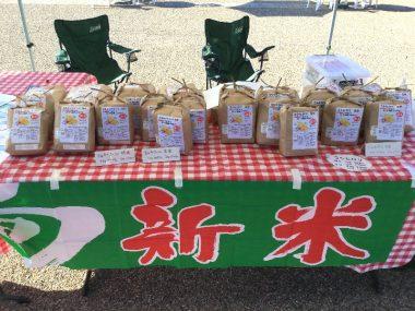 ミルキークイーンとコシヒカリそれぞれの玄米と精米