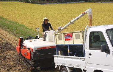 刈取ったら200m乾燥機に入れたら送風、乾燥機に充分の量が入ったら乾燥スタート