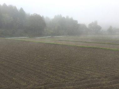 二回目の荒起、二山耕起の田んぼは朝霧の中